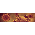 Infections bactérienne ou virales